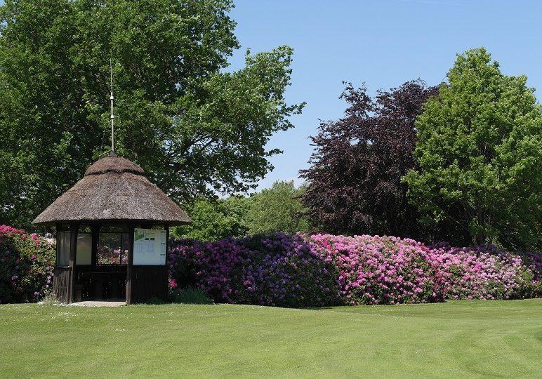 golfen-golfplatz-ostrfriesland-tee-1