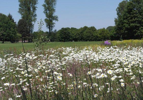 golfplatz-ostfriesland-entspanntes-spiel-2