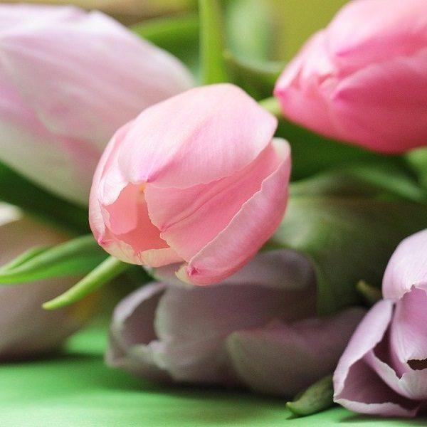 tulips-2167662_1280